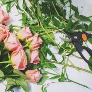 Florysta TestMirror.pl